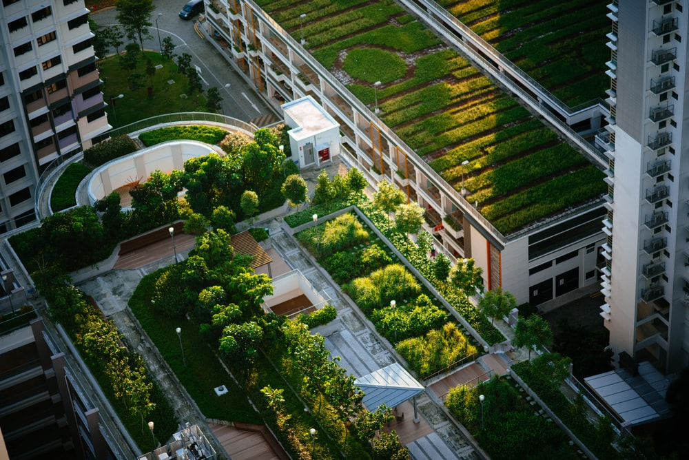 You are currently viewing 4 Benefits of a Living Roof